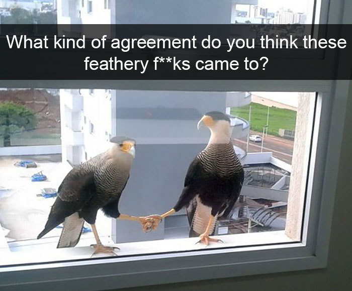feathery creatures agreement