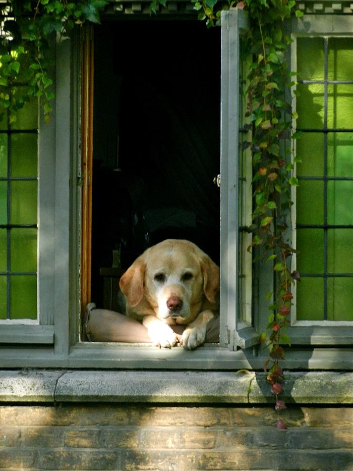fidel most photographed dog in bruges