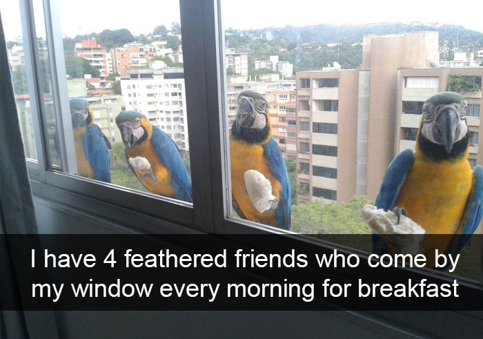 four feathered friends come for breakfast