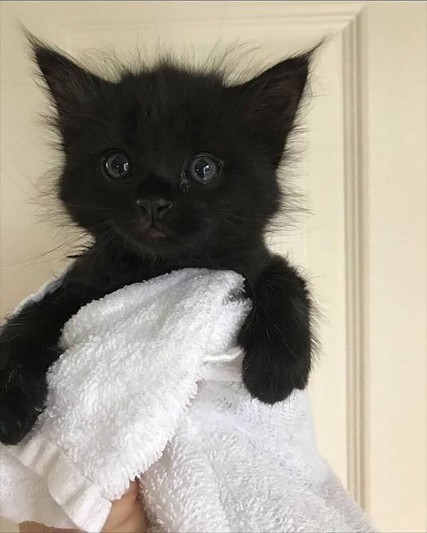 freshly bathed black kitty