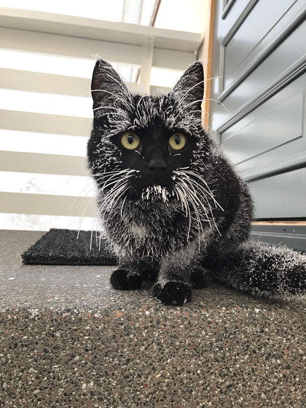 frosted black cat