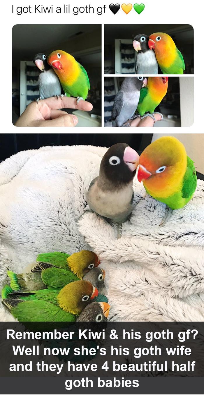 funny bird snapchats goth babies