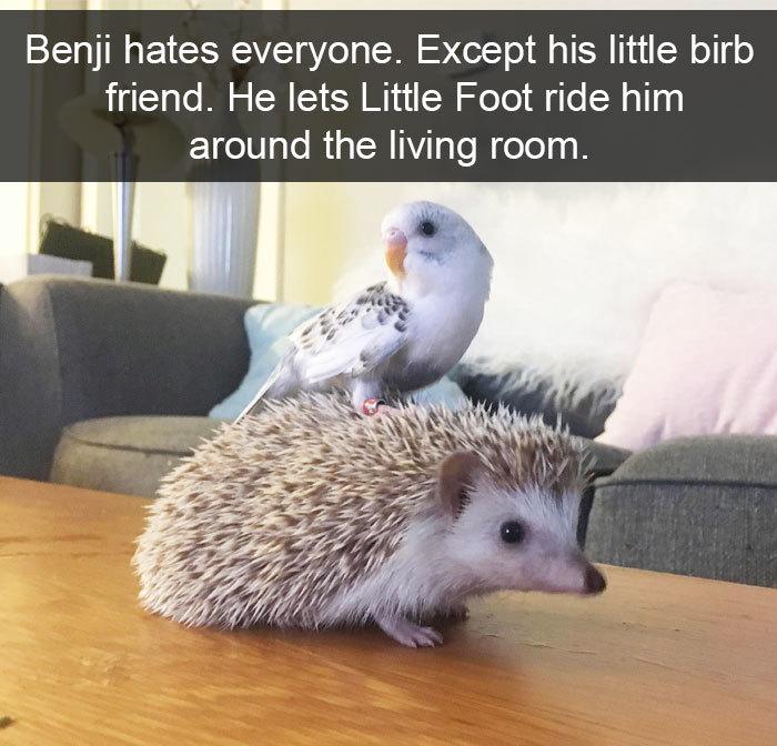 funny bird snapchats hedgehog friendship