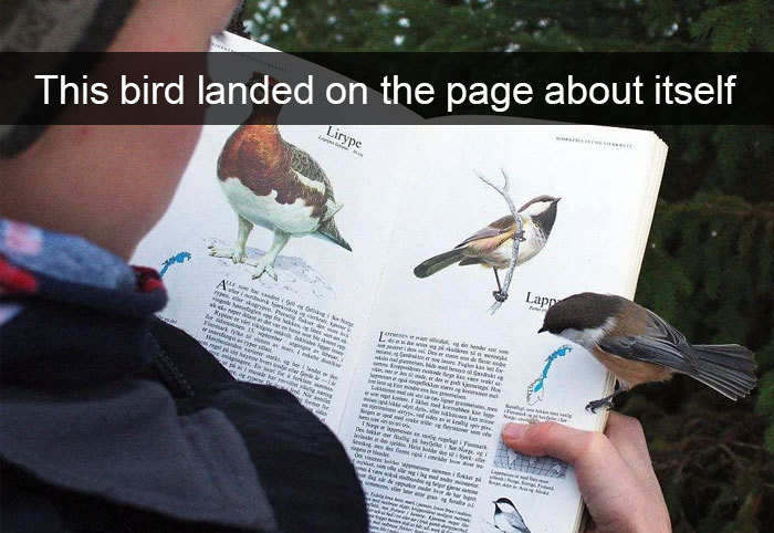 funny bird snapchats landing book page
