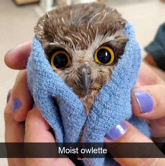 funny bird snapchats moist owlette