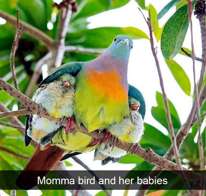funny bird snapchats momma with kids