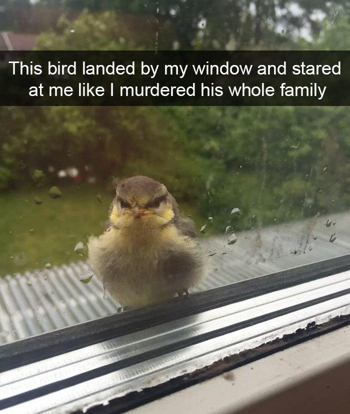 funny bird snapchats stare up window