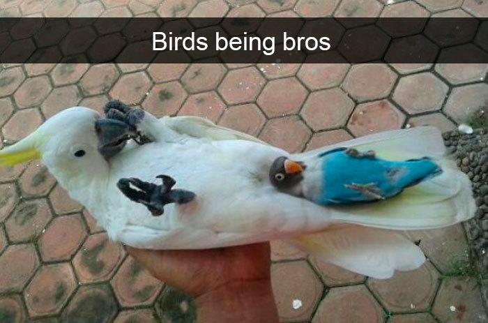 funny bird snapchats sweet bros