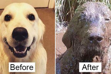 funny muddy dog photos
