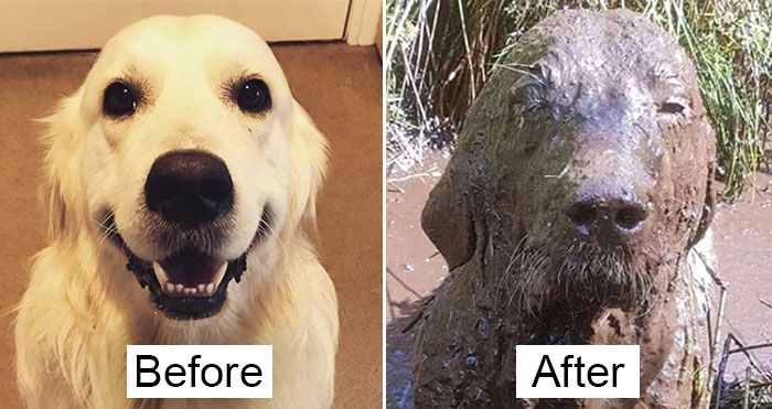 funny muddy dog photos