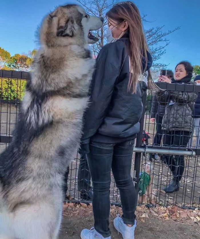 giant fluffy dog standing beside human