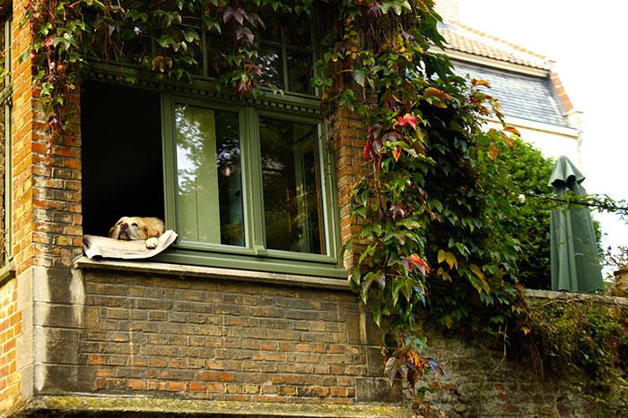 greenanorak shares bruges dog photo