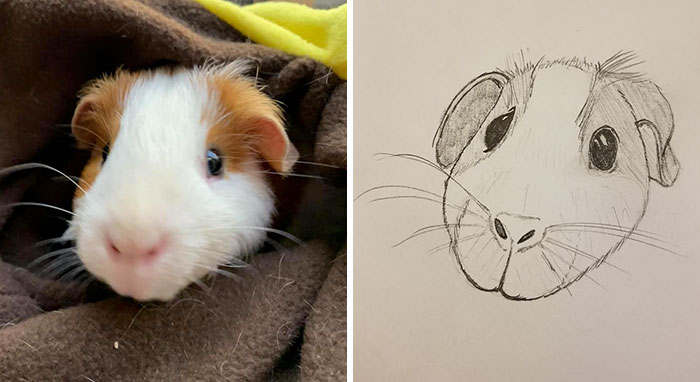 guinea pig sketch for WHS bad pet drawings campaign