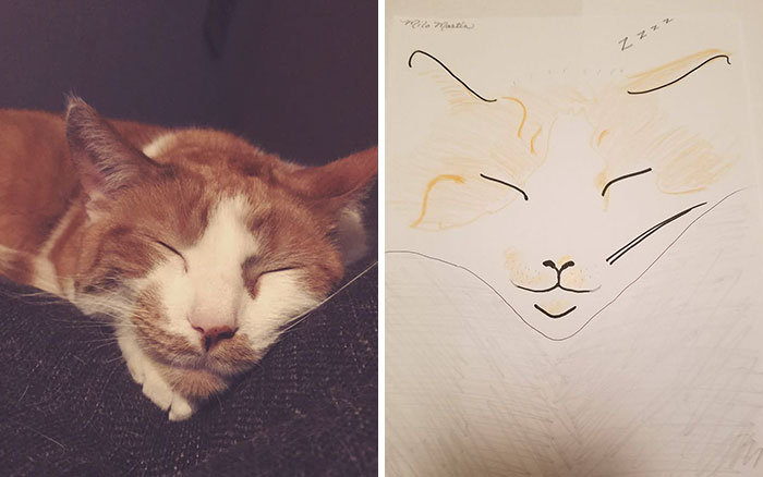 happily sleeping cat for WHS fundraiser