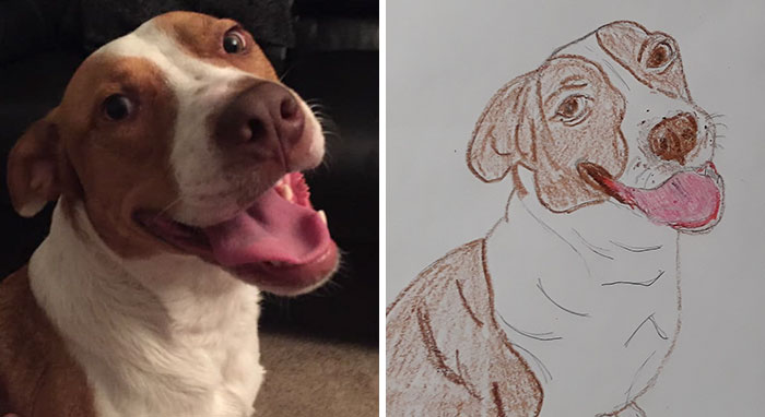 happy dog drawn for the whs bad pet drawing campaign