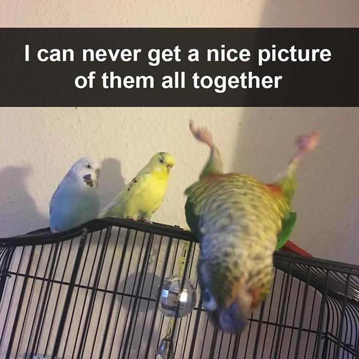 hilarious animal family photo