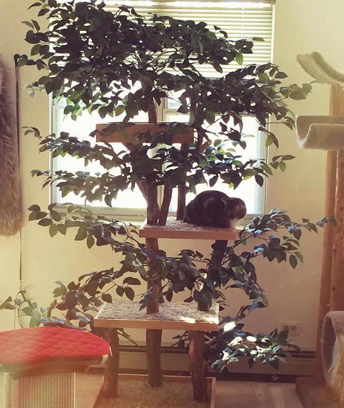 indoor pet treehouses multi-level