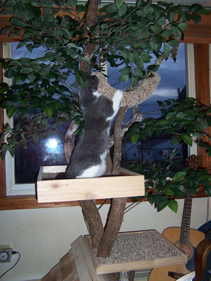 indoor pet treehouses real trees
