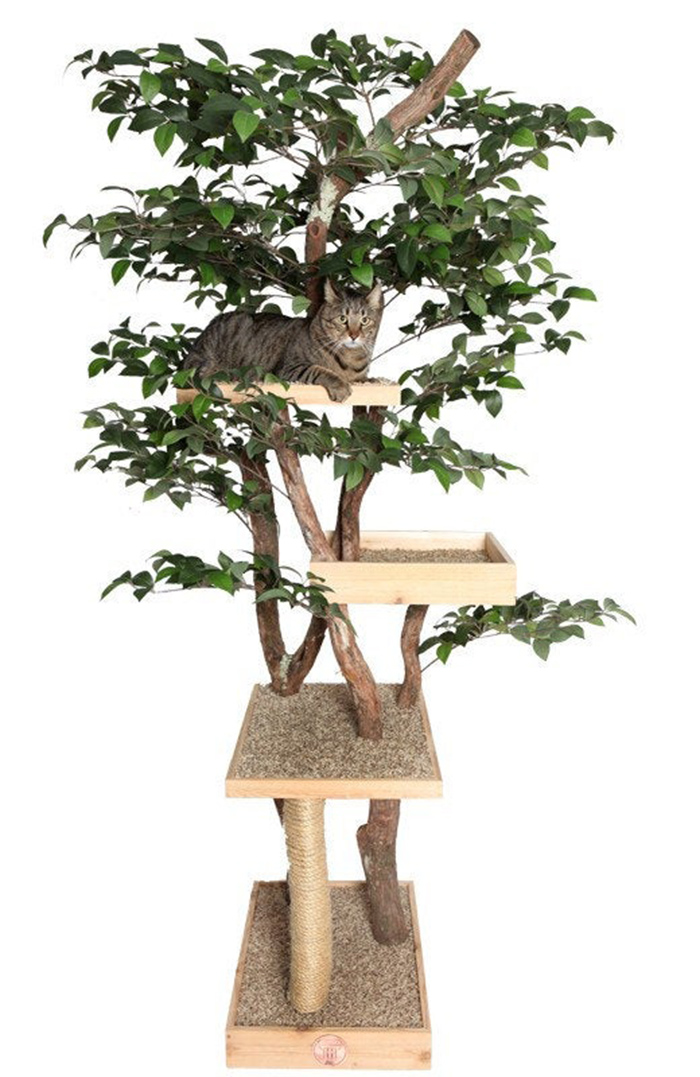 indoor pet treehouses sycamore