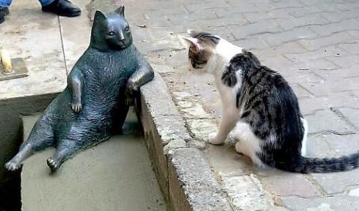 istanbul street cats visit bronze statue