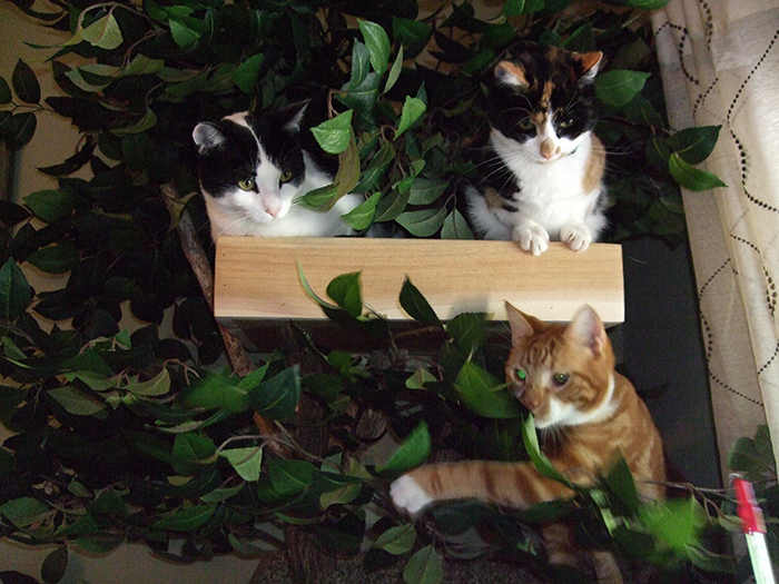 kittens climbing house made from real trees