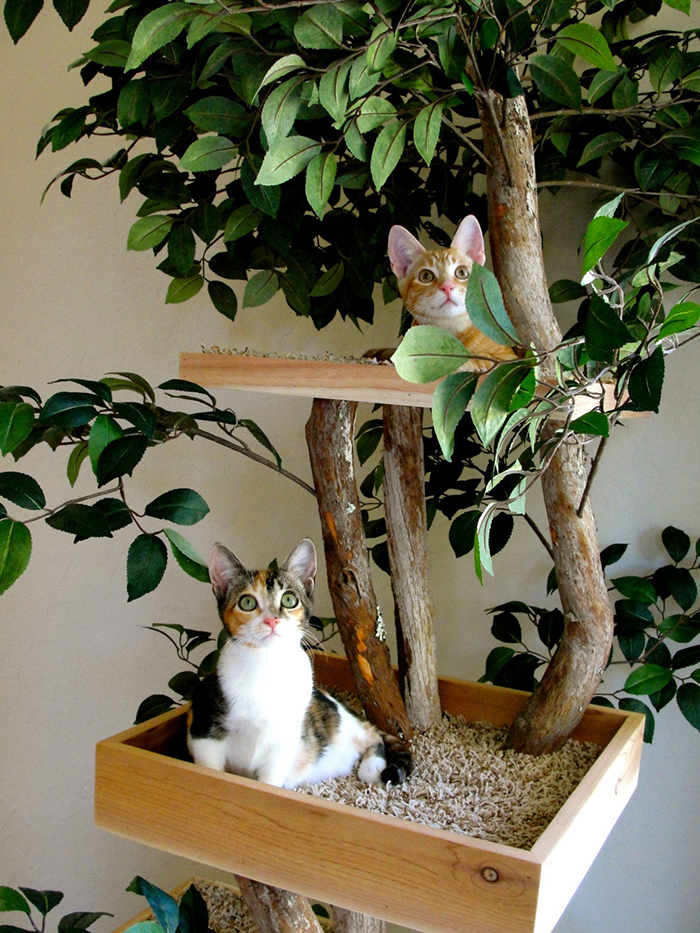 kittens tower made from real trees
