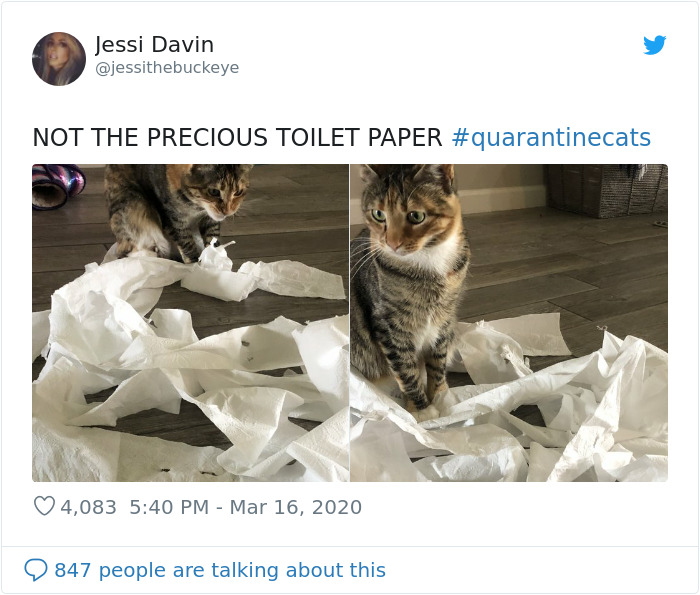 kitty destroys precious toilet paper