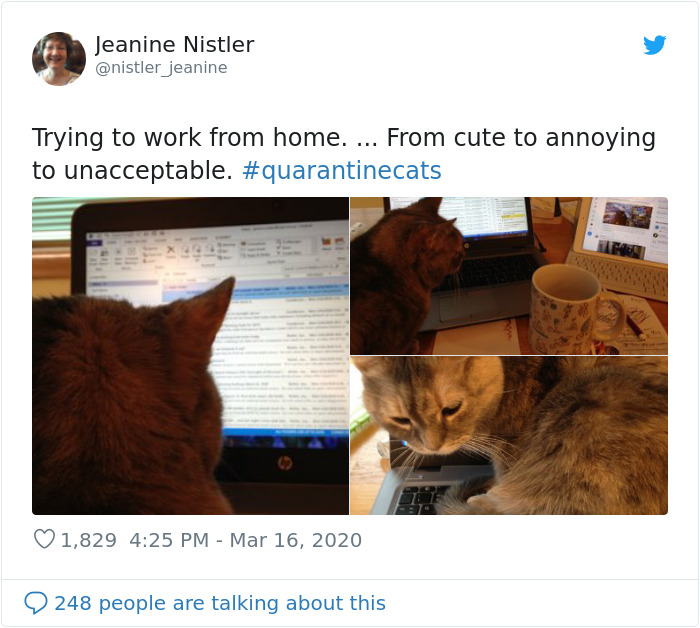 kitty distracts owner working from home