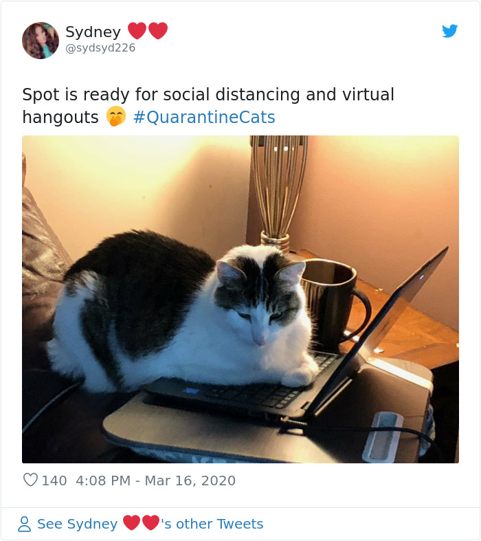 kitty virtual hangouts