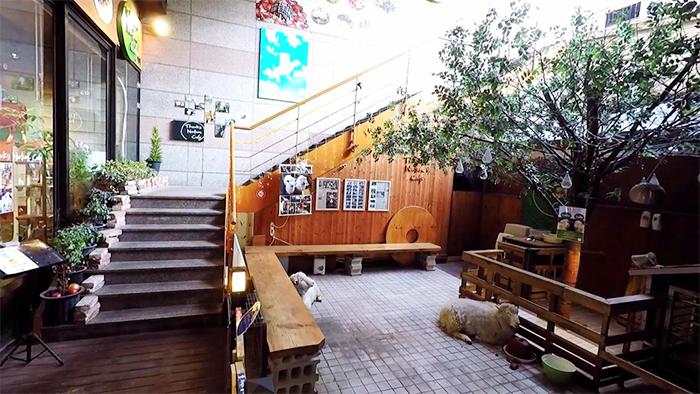 korean sheep cafe separate pen