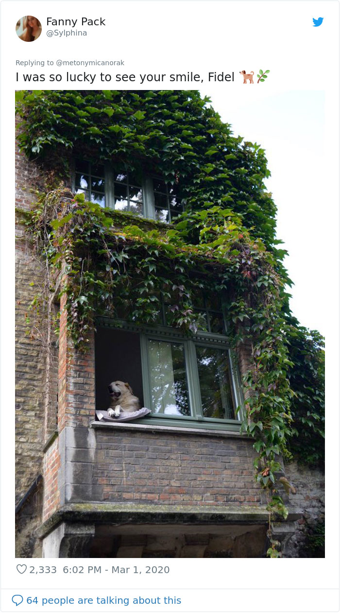 last photos of famous dog in bruges