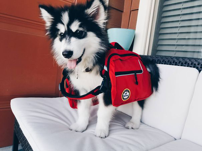 mal puppy hiking pack