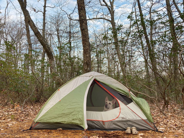 mowgli inside a camping tent