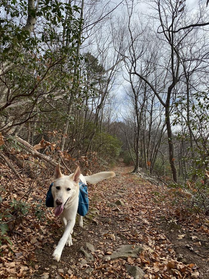 mowgli take a walk