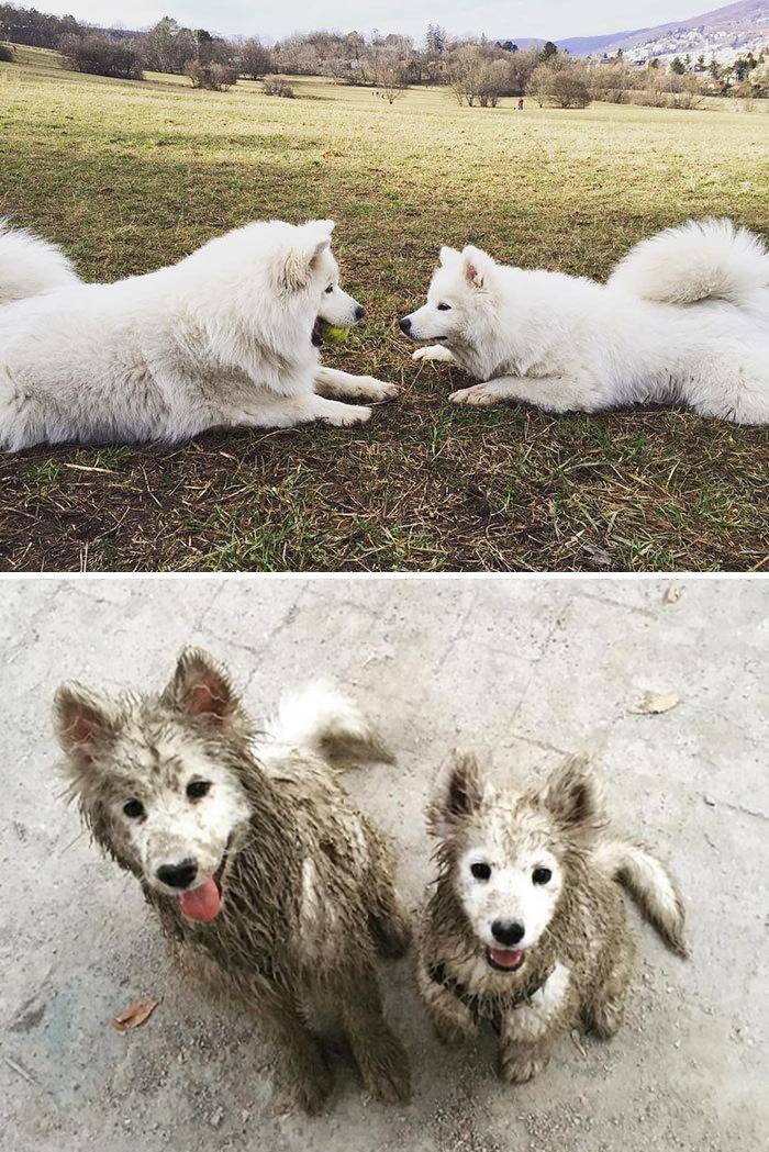 muddy dogs alice and figo