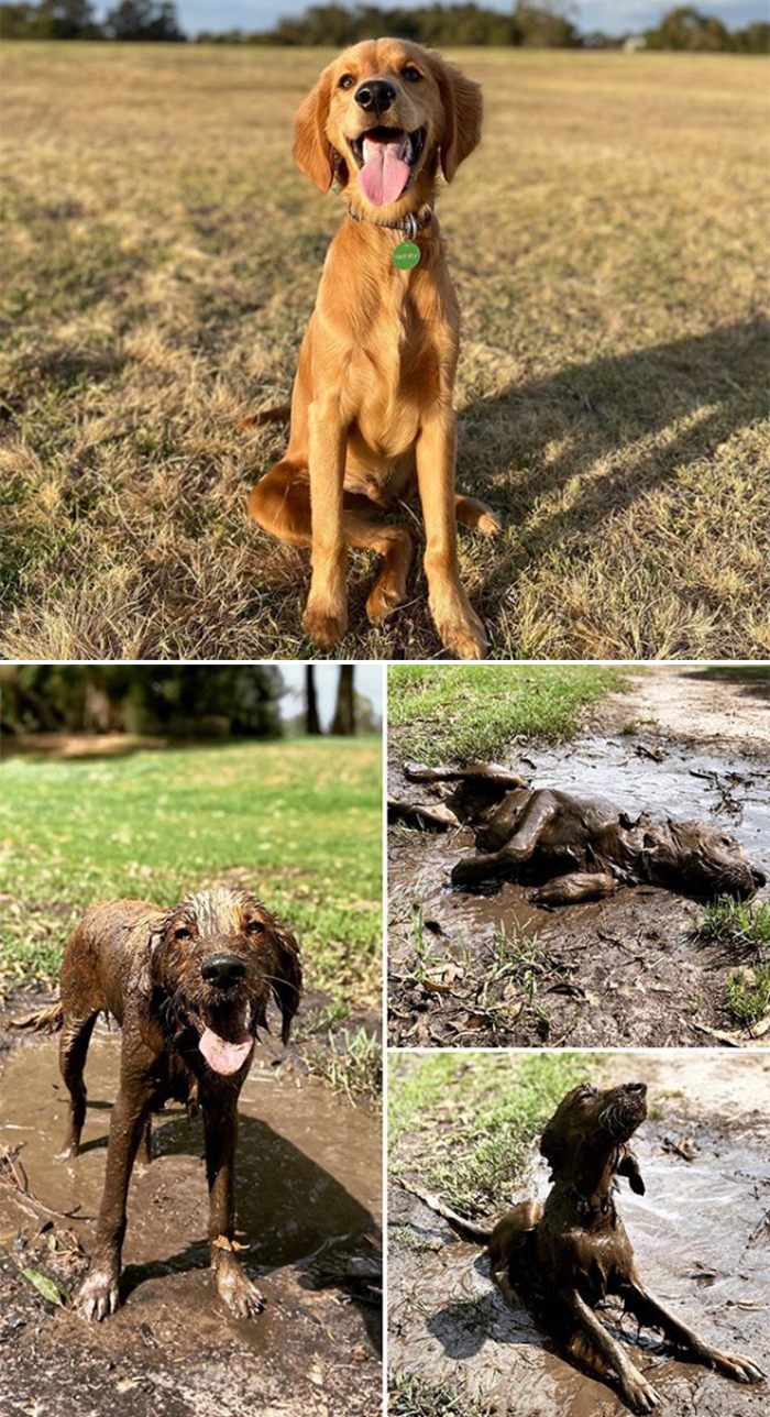 muddy dogs love puddles