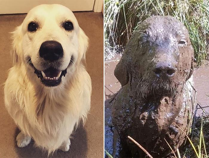 muddy dogs transformation