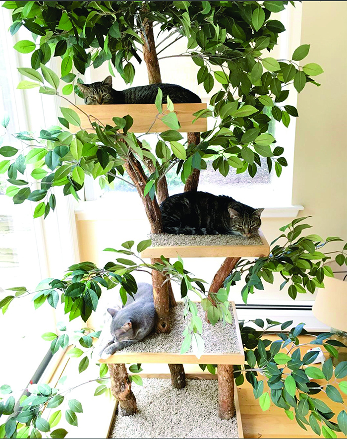 multi-level cat tower made from real trees