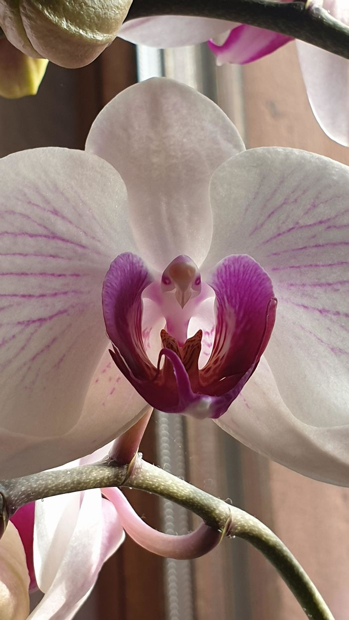 orchid with eagle pareidolia
