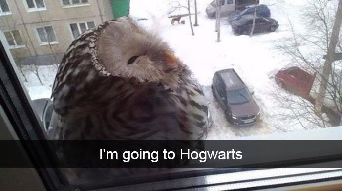 owl harry potter reference