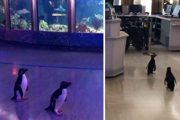penguins roaming around aquarium