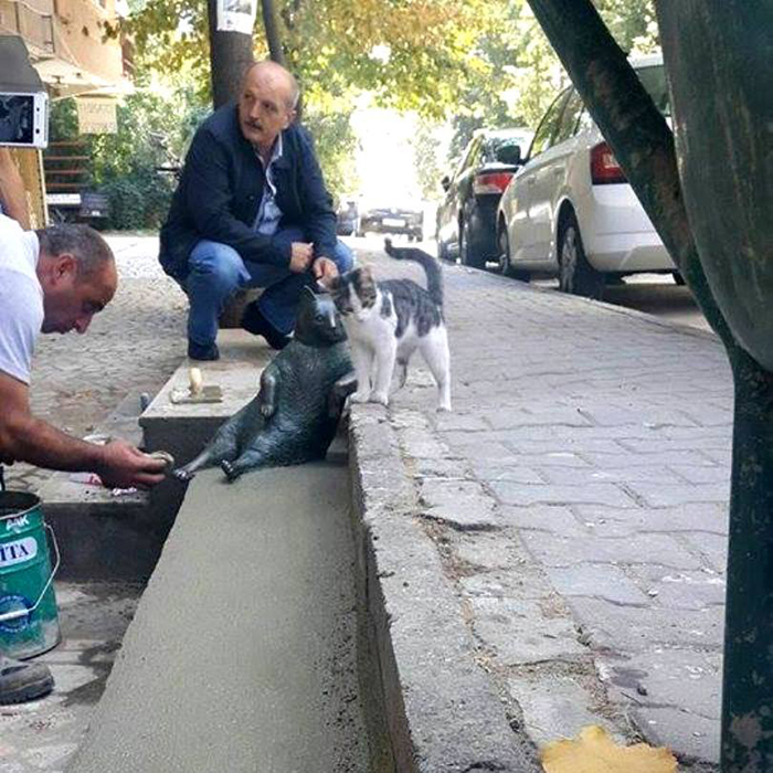 people and cats visit istanbul bronze statue