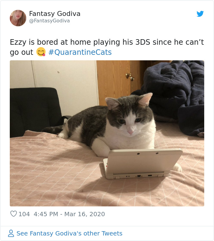 pet kitty playing 3ds