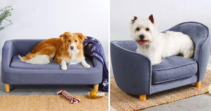 pet sofas