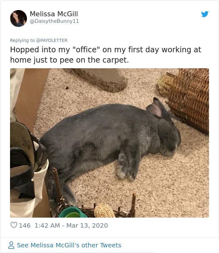pets coworker quarantine bunny companion