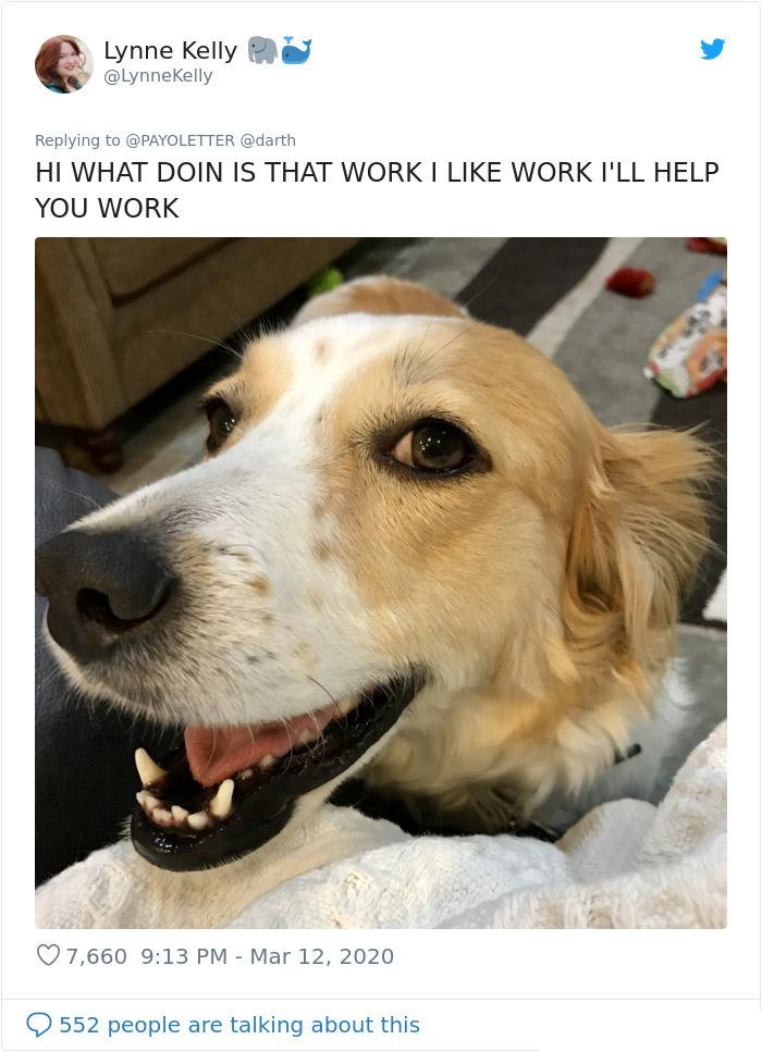 pets coworker quarantine dog helper