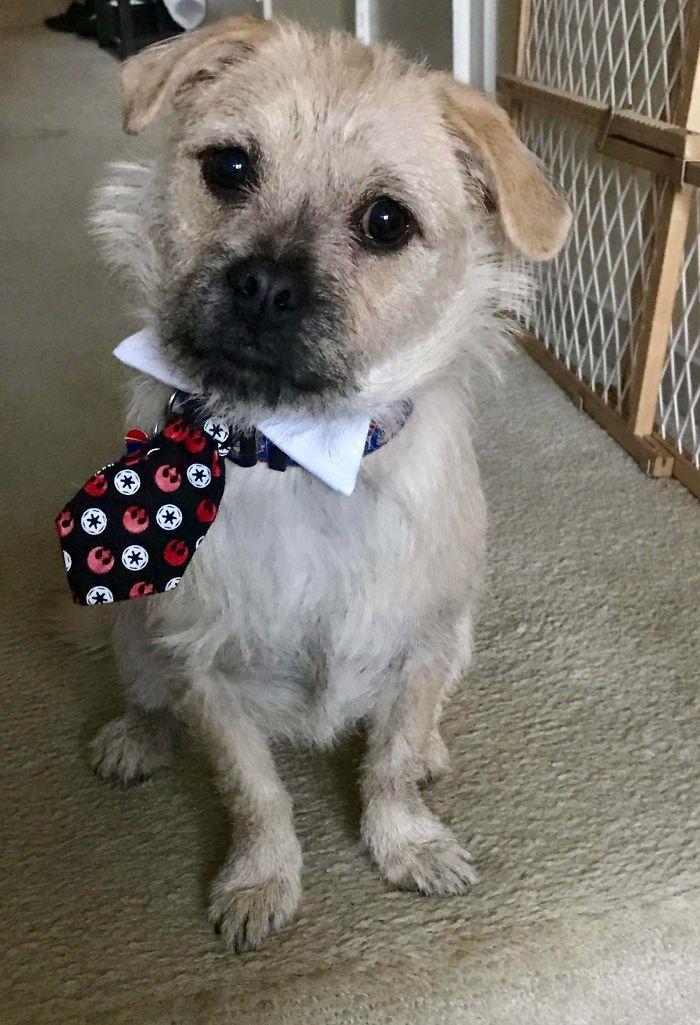 pets coworker quarantine puppy with necktie