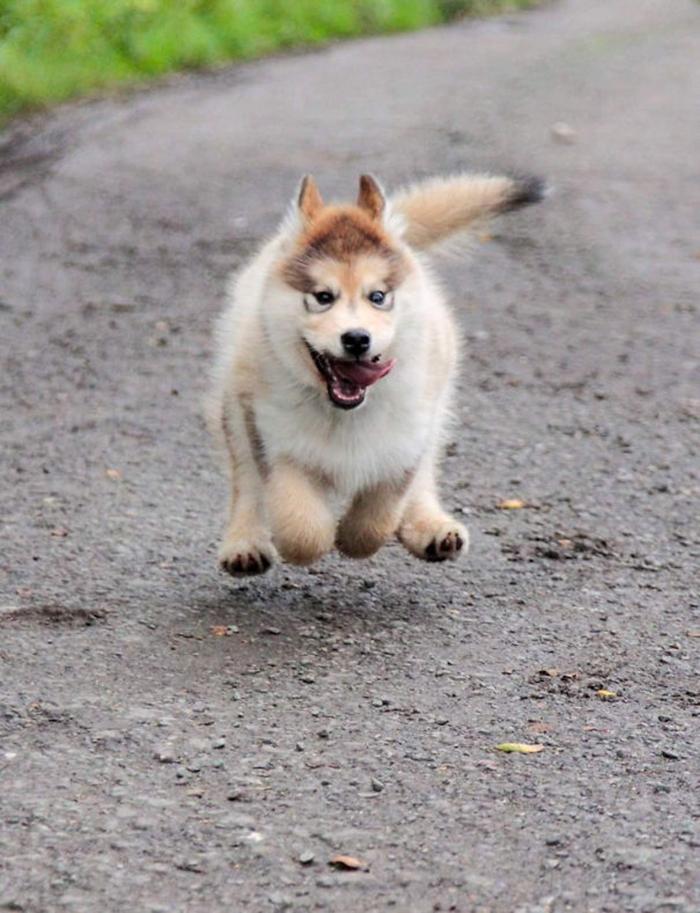 puppy mal looks like a rabbit