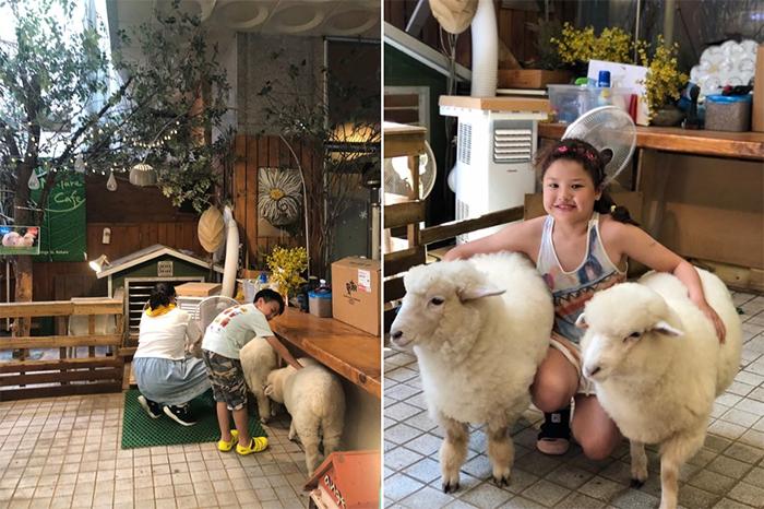 sheep cafe south korea