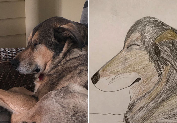 side profile of sleeping dog